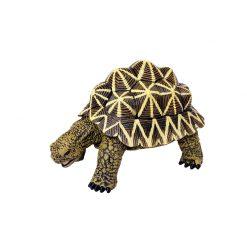 4D Puzzle Összerakható állatfigura | Indiai csillagteknős