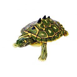 4D Puzzle Összerakható állatfigura | Térképes tarajos teknős