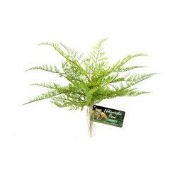 Zoomed Lace Fern Fátyolaszparágusz természethű műnövény