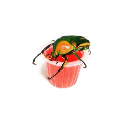 BeetleJelly - Bogárzselé - Eper