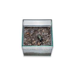 Prémium bogár és lárva terrárium felső ajtóval | 25 cm