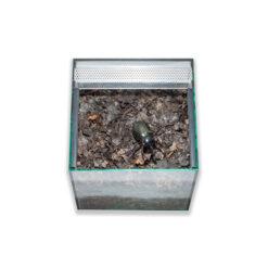Prémium bogár és lárva terrárium felső ajtóval | 30 cm