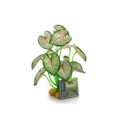 GiganTerra Syngonium Nyíllevél talpas műnövény