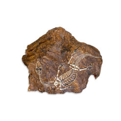 Nomoy Pet Dinosaur Fossil Dinoszaurusz őskövület sziklabarlang búvóhely