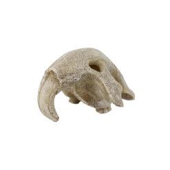 Reptiles-Planet Bird Skull Madár koponya dekoráció és mászóka